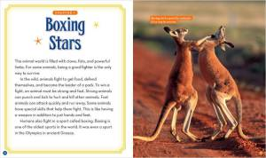 Animal Boxing Stars_spread